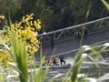 Wartawan Diusir Saat Liput Jembatan Ambruk di Utan Kemayoran