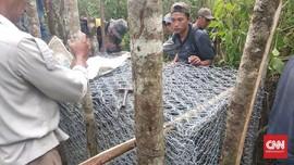 Antisipasi Harimau ke Pemukiman, Warga Lahat Pasang Jerat