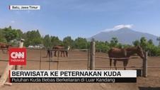 VIDEO: Berwisata ke Peternakan Kuda