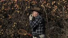 FOTO: Perburuan Apel Langka di Amerika