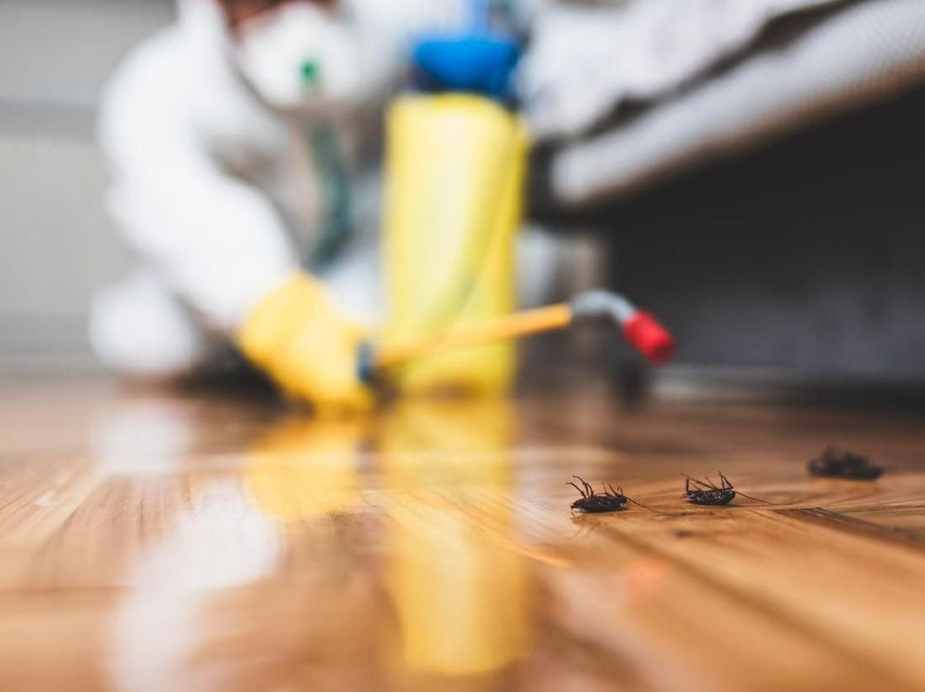 4 Cara Alami Basmi Kecoak Tanpa Pestisida
