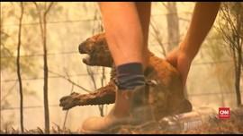 VIDEO: Seorang Perempuan Selamatkan Koala dari Kebakaran