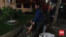 Polisi Kembali Ciduk Pembuang Bangkai Babi Hog Cholera