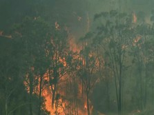 Bank Dunia: Kerugian Kebakaran Hutan RI Capai Rp 72,95 T