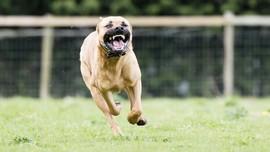6 Langkah Pertolongan Pertama Saat Digigit Anjing