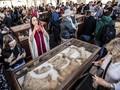 FOTO: Mumi Hewan Langka Ditemukan di Mesir