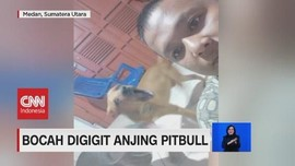 VIDEO: Anak 7 Tahun Digigit Anjing Pitbull