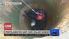VIDEO: Penyelamatan Sapi dari Dalam Sumur