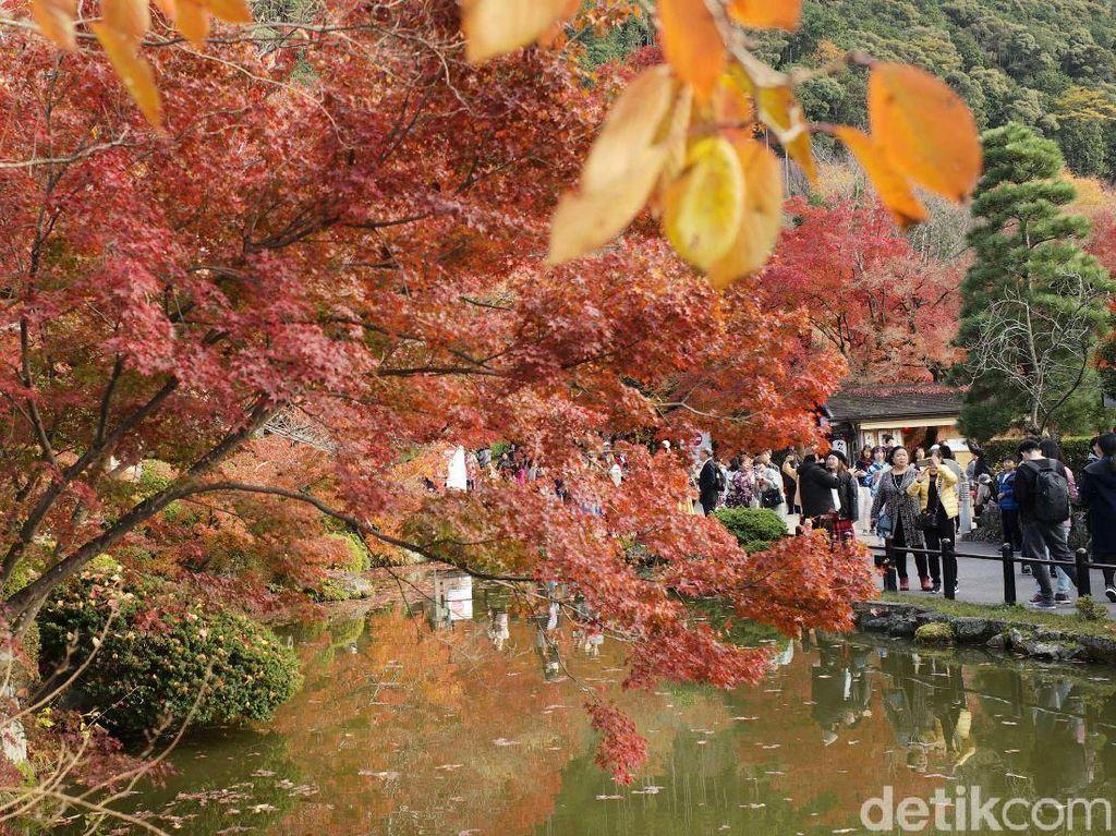 Momen ini jadi buruan para turis di Jepang.