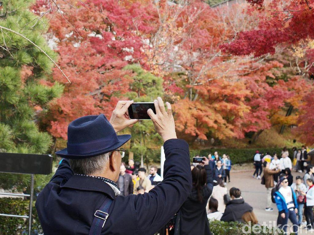 Diperkirakan, pekan ini merupakan puncak musim gugur (autumn) di negeri matahari terbit tersebut.