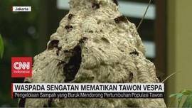 VIDEO: Waspada Sengatan Mematikan Tawon Vespa