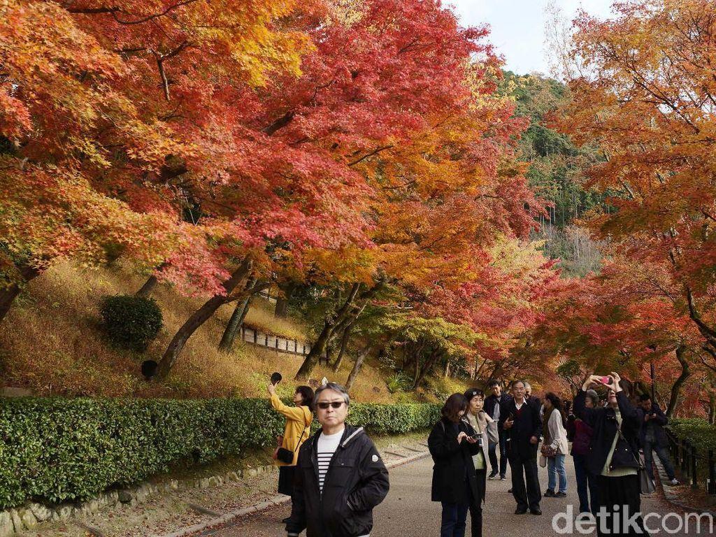 Udara dingin 10 hingga 15 derajat Celcius tidak menyurutkan turis menikmati musim gugur.