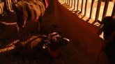 Sampai pada 2014 silam, Gadhimai Festival melibatkan kerbau air, babi, kambing, ayam, dan burung merpati, semua dalam jumlah besar. (Photo by PRAKASH MATHEMA / AFP)