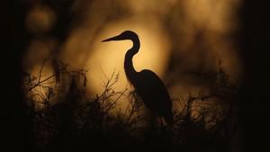 FOTO: Bertarung dengan Iklim Selamatkan Taman Everglades