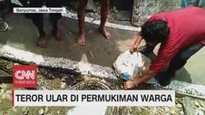 VIDEO: Teror Ular Masuk Pemukiman Warga