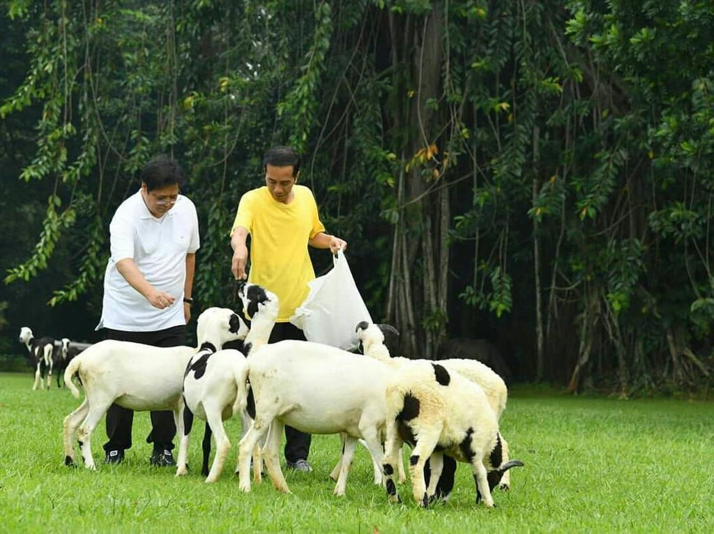 Airlangga juga terkenal dekat dengan Presiden Jokowi. Ia pernah joging bersama di kawasan Istana Bogor. Sambil joging, Airlangga dan Presiden Jokowi asyik memberi makan beberapa ekor kambing. Foto: instagram @airlanggahartanto