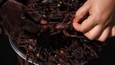 Beda dulu dan sekarang. Proses memasak tarantula kini lebih sederhana. Lon, misalnya, hanya tinggal membubuhi tarantula dengan garam dan rempah-rempah untuk kemudian digoreng.