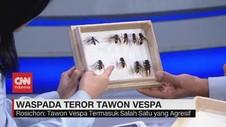 VIDEO: Waspada Teror Tawon Vespa