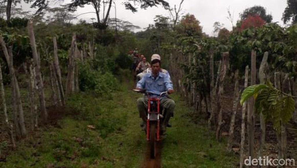 2 Orang di Sumsel Tewas Diterkam Harimau, Warga Diimbau Pakai Topeng ke Hutan
