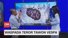 VIDEO: Fakta Seputar Tawon Vespa