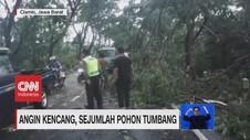VIDEO: Pengendara Motor Tewas Tertimpa Pohon Tumbang