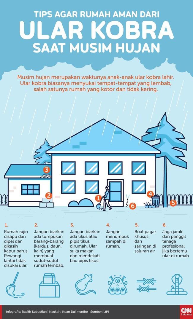INFOGRAFIS: Tips Rumah Aman dari Ular Kobra Saat Musim Hujan