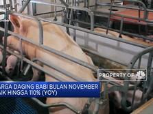 Harga Daging Babi di China Meroket