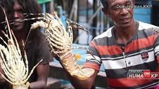 VIDEO: Penyelundupan Benur Lobster Marak, Negara Rugi Rp900 M