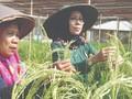 Batan Kenalkan Nuklir Lewat Taman Sains & Agro Tekno