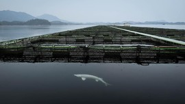 FOTO: Mengintip Pabrik Kaviar dari China yang Mendunia