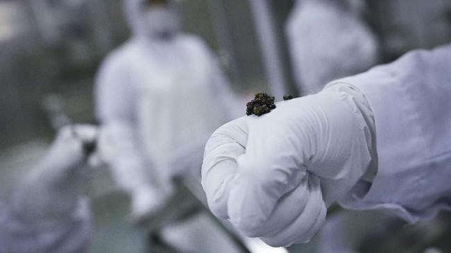 Harga kaviar bergantung dengan spesiesnya. Harga kaviar bervariasi antara Rp19,8 juta hingga Rp357,7 juta per kilogram. (Photo by WANG ZHAO / AFP)