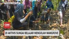 VIDEO: 20 Aktivis Sungai Belajar Mengolah Mangrove