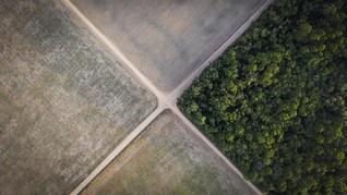 FOTO: Hutan Tropis Amazon di Persimpangan Jalan