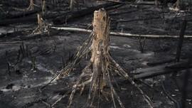 Peneliti Temukan Jejak Hutan Hujan Kuno di Antartika