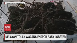 VIDEO: Nelayan Tolak Wacana Ekspor Baby Lobster
