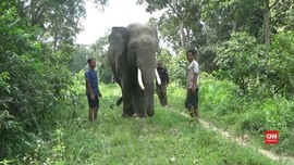 VIDEO: Gajahpun Mengungsi Karena Banjir