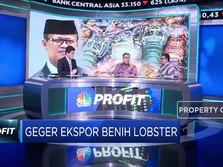 Ekonom: Larangan Ekspor Benih Berhasil Dorong Ekspor Lobster