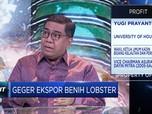 Kadin & Ekonom Bedah Polemik Ekspor Benih Lobster
