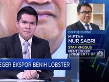 KKP Akan Buka Keran Ekspor Benih Lobster, Ini Kata Stafsus