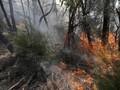 Korban Karhutla Australia Dievakuasi Lewat Jalur Laut