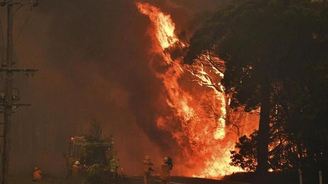 Karhutla juga telah menghanguskan sekitar 3 juta hektar lahan selama beberapa bulan terakhir, menghancurkan 800 rumah penduduk, serta menyebabkan 6 orang meninggal dunia. (Mick Tsikas/AAP Images via AP)