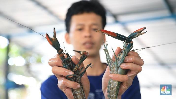 Menteri KKP Edhy Prabowo telah memfinalisasi revisi Peraturan Menteri (Permen) KKP Nomor 56 tahun 2016 tentang larangan ekspor benih lobster.