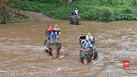 VIDEO: Melihat Sisi Kelam Wisata Gajah di Thailand