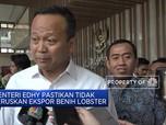 Menteri Edhy Pastikan Tidak Teruskan Ekspor Benih Lobster