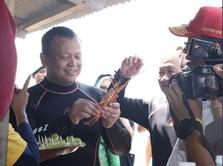 Kontroversi Menteri Edhy, Dari Cantrang Hingga Ekspor Lobster