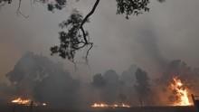 Pesawat Pemadam Api Kebakaran Hutan Australia Jatuh