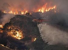 Penampakan, Dahsyatnya Kebakaran Hutan di Australia