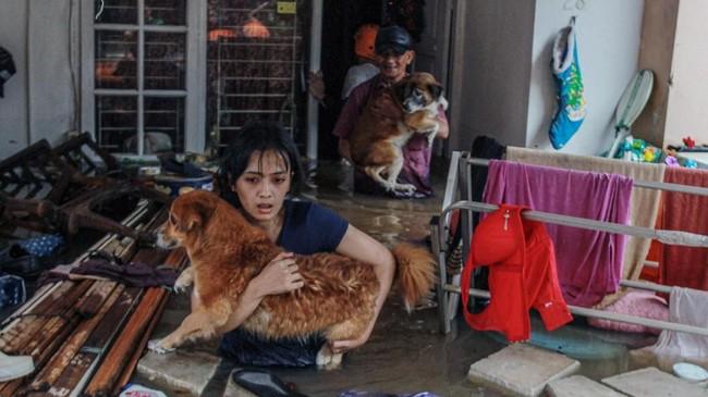 Warga menyelamatkan anjing peliharaannya dari dalam rumahnya yang terendam banjir di Perumaha Puri Bintaro Indah, Ciputat, Tangerang Selatan, Banten, Rabu (1/1). Banjir yang menggenang setinggi 1,5 meter di perumahan tersebut akibat hujan deras seharian yang mengguyur kawasan tersebut. (ANTARA FOTO/Muhammad Iqbal)