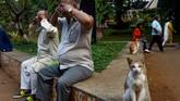 Seekor kucing duduk di sebelah para pria yang berlatih yoga di dalam taman di Mumbai pada Rabu (25/12). (Photo by Indranil MUKHERJEE / AFP)