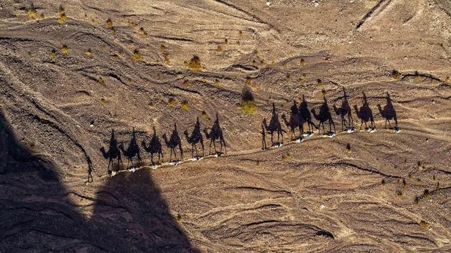 Orang-orang naik unta selama hari libur Yahudi Hanukkah, di padang pasir dekat kota Israel pada Kamis (26/12). (AP Photo/Oded Balilty)